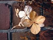 Cây cảnh - Vườn - Cây chết khó hiểu - xem lại 8 sai lầm hay mắc