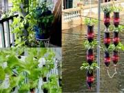 Nhà đẹp - Chàng họa sĩ Hà thành mày mò trồng cây từ phế thải