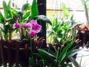 Nhà đẹp - HN: Ghen tị vườn ban công 30m² của cô giáo nghỉ hưu
