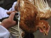 Cảnh báo nguy cơ cúm A(H7N9) vào Việt Nam