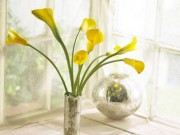Nhà đẹp - 3 loại hoa phá vỡ phong thủy nên kiêng trong nhà