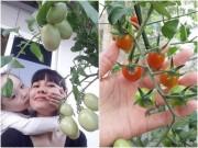 Nhà đẹp - Học mẹ trẻ Hà Nội luyện bí kíp trồng cà chua trĩu cây