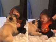 Clip Eva - Bé 6 tháng tuổi cười không ngừng vì chú chó cố gắng chơi cùng
