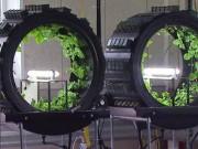 """Nhà đẹp - Trang trại triệu đô: Trồng rau trong những """"bánh xe"""""""