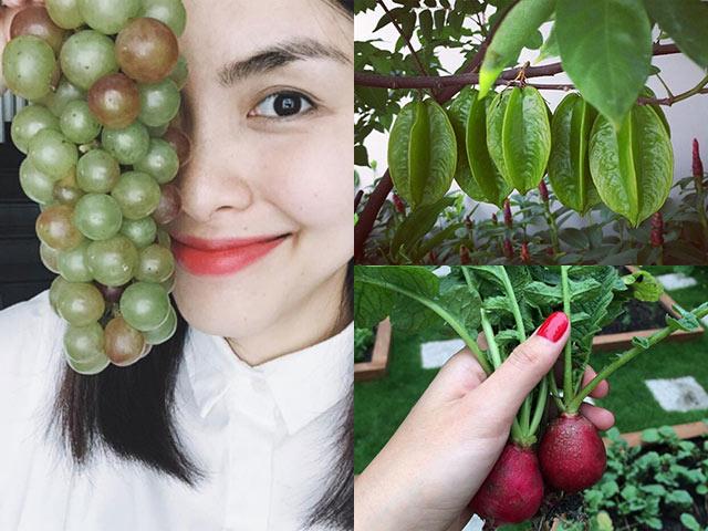 Đã mắt với rau quả tươi ngon trong vườn của ba ruột Tăng Thanh Hà