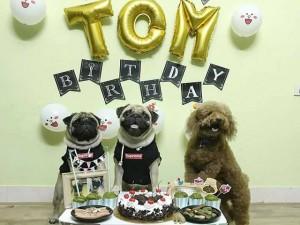 """Chú chó 2 tuổi được tổ chức sinh nhật hoành tráng, dân mạng """"phát hờn"""": """"Sướng hơn cả người!"""""""