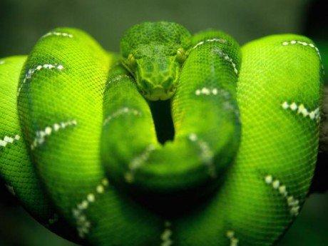 Vẻ đẹp mang sắc chồi non của rắn lục