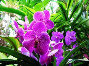 """Hoa lan tím ra hoa lại chỉ trong 2-3 tuần nhờ cách kích thích """"dễ như ăn kẹo"""""""