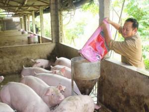 Giá lợn 15/12: Tăng lên 34.000 đồng/kg, nông dân khấp khởi hi vọng vụ Tết
