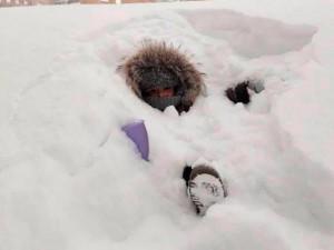 Ảnh: Cái rét tê tái ở nơi nhiệt độ -55 độ C, tuyết ngập cả đầu người
