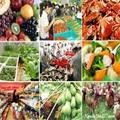 Giá cả thực phẩm chợ Tân Bình 15-1