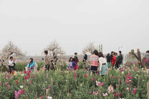 Vườn hoa Bách Nhật hút khách ngày xuân-2