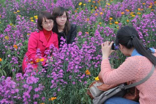 Vườn hoa Bách Nhật hút khách ngày xuân-14