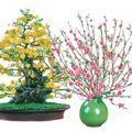 Nhà đẹp - Tuyệt chiêu chọn cây trưng Tết năm nay
