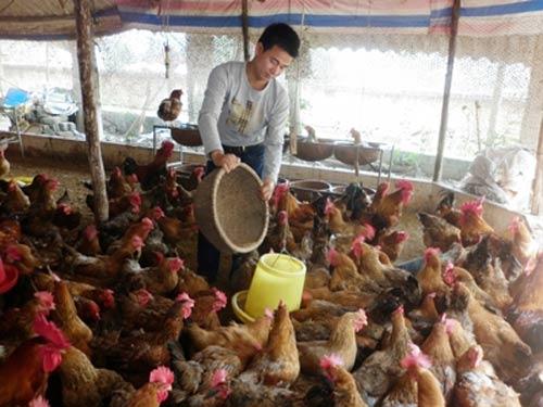 Giá thức ăn chăn nuôi ở VN cao nhất TG?-1