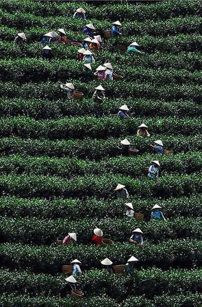 Việt Nam, hình hài một chữ S trong bức ảnh tuyệt đẹp.
