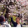 Tin tức - Chùm ảnh: Hoa anh đào nở sớm ở Nhật Bản
