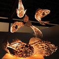 Nhà đẹp - Đèn cá đẹp lung linh trong bóng tối