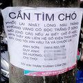 Tin tức - Đại gia Hà Nội chi 50 triệu tìm... chó lạc