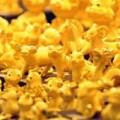 Tin tức - Đầu năm 2014, giá vàng bật tăng mạnh
