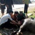 Tin tức - Lào Cai: Đã có 444 con gia súc bị chết rét