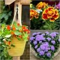 Nhà đẹp - 3 loài hoa đẹp đuổi muỗi 'cực đỉnh'