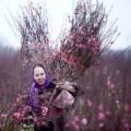 Ảnh đẹp Eva - Đào Nhật Tân bắt đầu bung nở đón Tết Giáp Ngọ