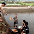 Tin tức - Cả làng bắt cá chép đỏ tiễn Táo quân đi chầu