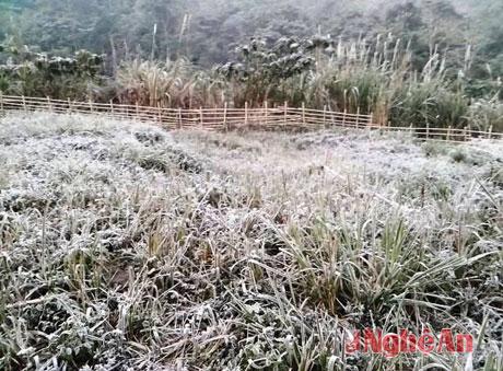 nghe an: suong muoi chu khong phai bang tuyet - 1