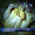 Tin tức - Sát Tết, phát hiện gà nhiễm bột sắt cực độc