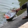 Tin tức - Muôn kiểu thả cá chép của người Hà Nội
