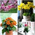 Nhà đẹp - Tết này giàu sang, may mắn nhờ hoa đẹp