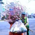 """Tin tức - Sau Tết, đào """"khoe sắc"""" ngoài bãi rác"""