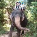 Làng sao - Nathan Lee sang Thái cưỡi voi, xả stress