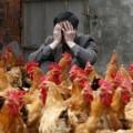 Trung Quốc: Thêm 3 ca mới nhiễm cúm H7N9