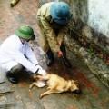 Tin tức - Bùng phát dịch chó dại, 10 người thương vong