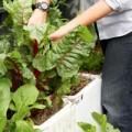 Nhà đẹp - Tiện lợi trồng rau sạch bằng hộp xốp