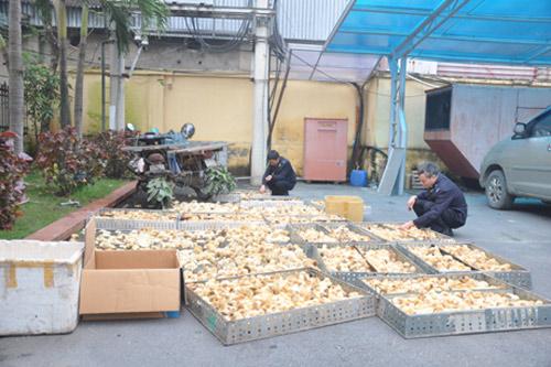 Bắt giữ 800 con gia cầm lậu từ Trung Quốc-1