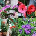 Nhà đẹp - Người Hà Nội chuộng trồng hoa gì mùa xuân?