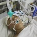 Tin tức - CSGT bị đánh chấn thương sọ não vẫn đang hôn mê