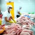 Mua sắm - Giá cả - Cá tra Việt Nam sẽ trở lại thị trường Nga