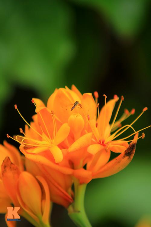 Đến Hà Nội ngắm hoa nhà Phật khoe sắc-8