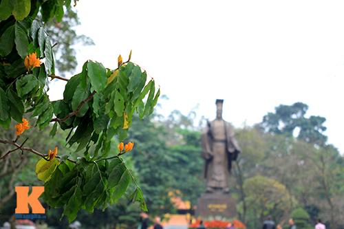 Đến Hà Nội ngắm hoa nhà Phật khoe sắc-1