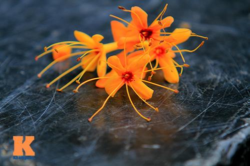 Đến Hà Nội ngắm hoa nhà Phật khoe sắc-12