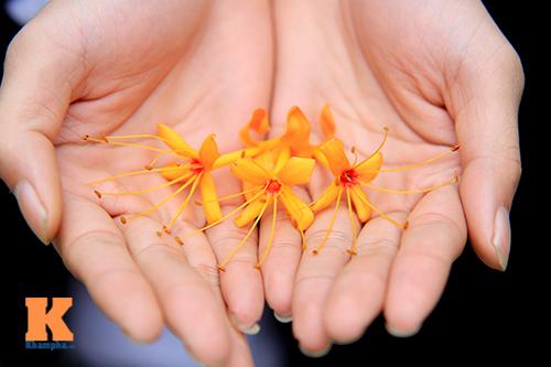 Đến Hà Nội ngắm hoa nhà Phật khoe sắc-14