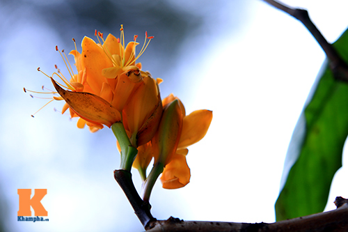 Đến Hà Nội ngắm hoa nhà Phật khoe sắc-6