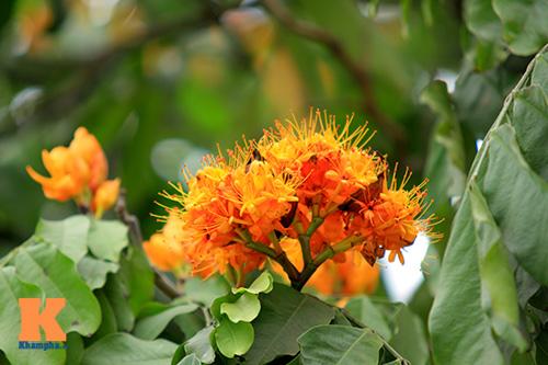 Đến Hà Nội ngắm hoa nhà Phật khoe sắc-3