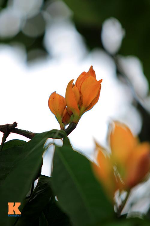 Đến Hà Nội ngắm hoa nhà Phật khoe sắc-2