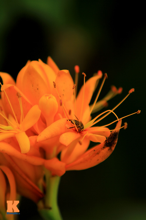 Đến Hà Nội ngắm hoa nhà Phật khoe sắc-9