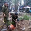 Tin tức - Sưa 20 năm tuổi bị đốn hạ trong đêm giữa Hà Nội